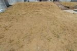 BigBag Lawn Seeds